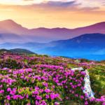 valley-of-flowers-footloose-min