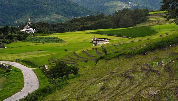 Ziro valley is another best bachelor party destinations in India.