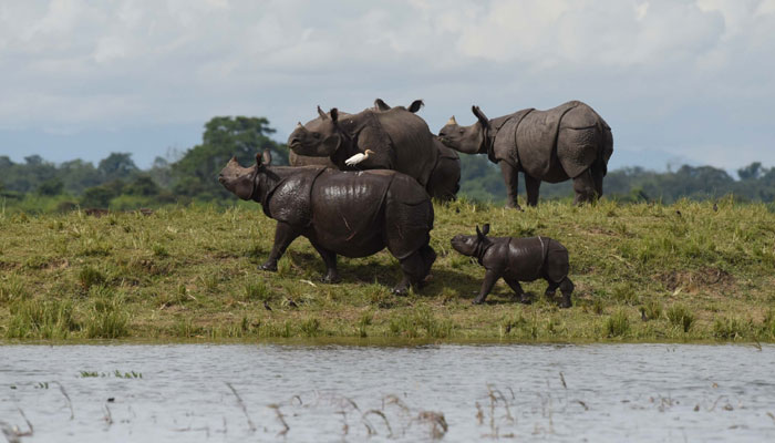 kaziranga wildlife sanctuary trip