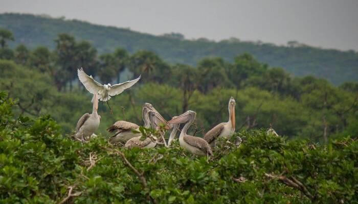 nawabganj bird sanctuary
